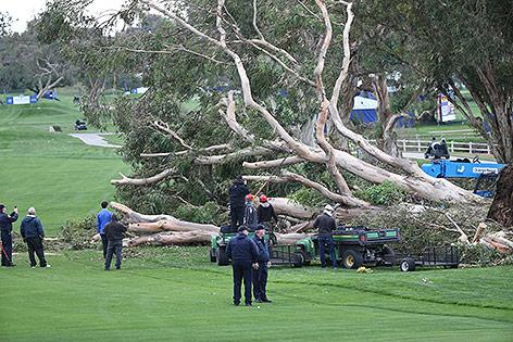 Entwurzelter Baum auf dem Rasen